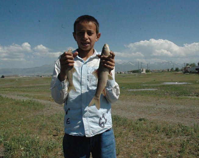 Karasuda toplu balık ölümleri