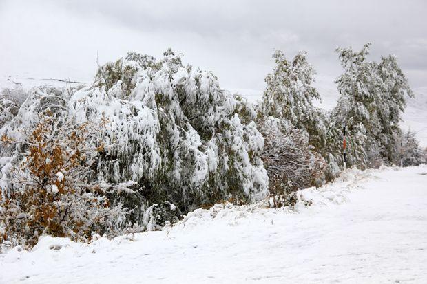 Erzurum kar yağışıyla birlikte beyaz örtüye büründü